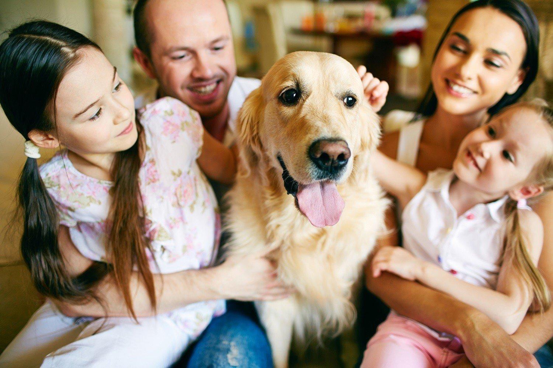 Семья собачников картинки