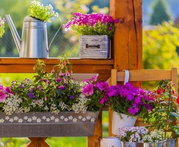 Balkonunuzda hobi bahçesi yapmak çok kolay!
