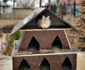TOKİ inşaatlarının atık malzemeleri sokak hayvanlarına yuva oluyor!